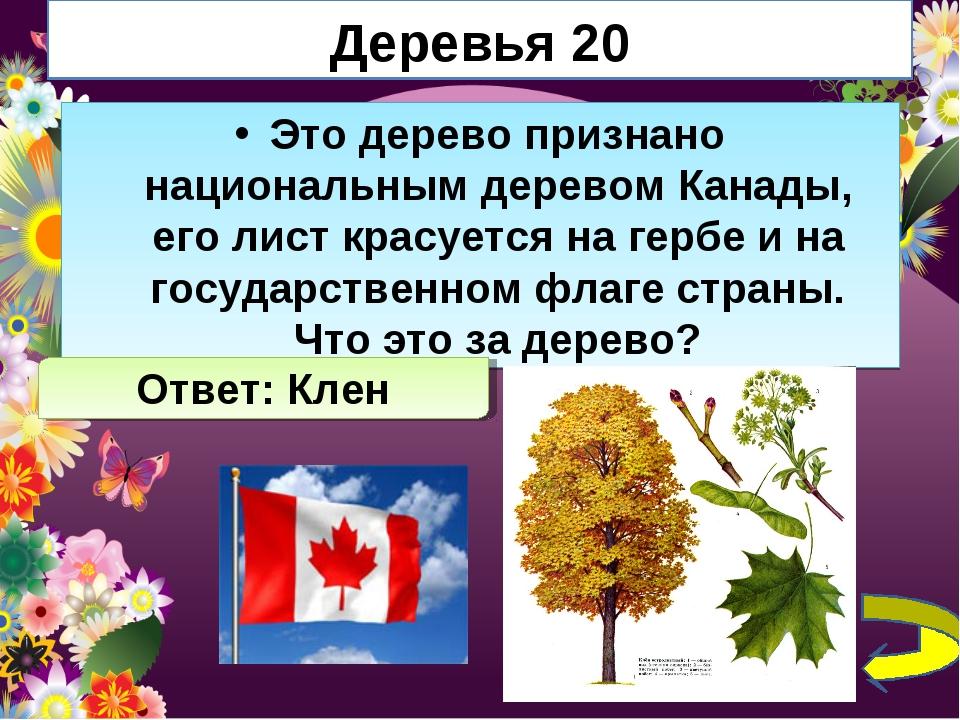 Деревья 20 Это дерево признано национальным деревом Канады, его лист красуетс...