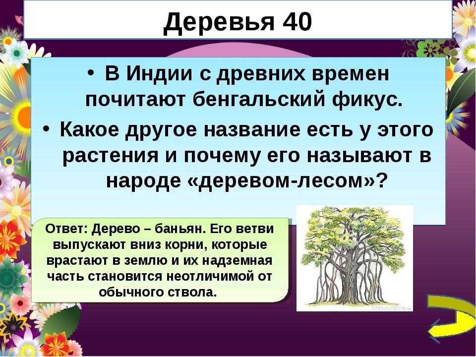 Деревья 40 В Индии с древних времен почитают бенгальский фикус. Какое другое...