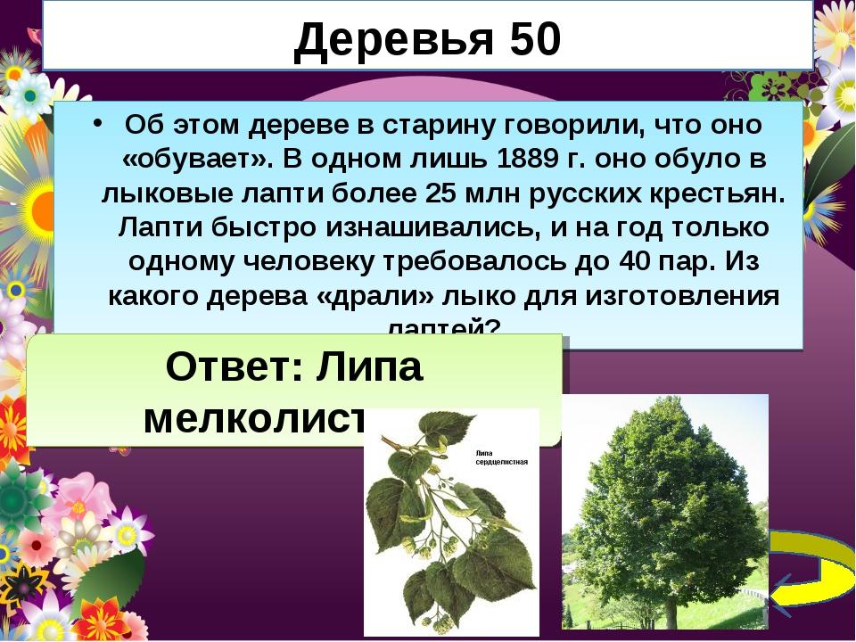 Деревья 50 Об этом дереве в старину говорили, что оно «обувает». В одном лишь...