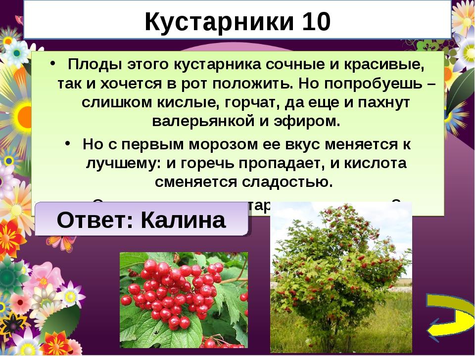 Кустарники 10 Плоды этого кустарника сочные и красивые, так и хочется в рот п...