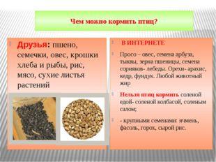 Чем можно кормить птиц? Друзья: пшено, семечки, овес, крошки хлеба и рыбы, ри