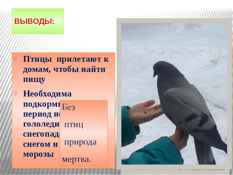 ВЫВОДЫ: Птицы прилетают к домам, чтобы найти пищу Необходима подкормка птиц в...