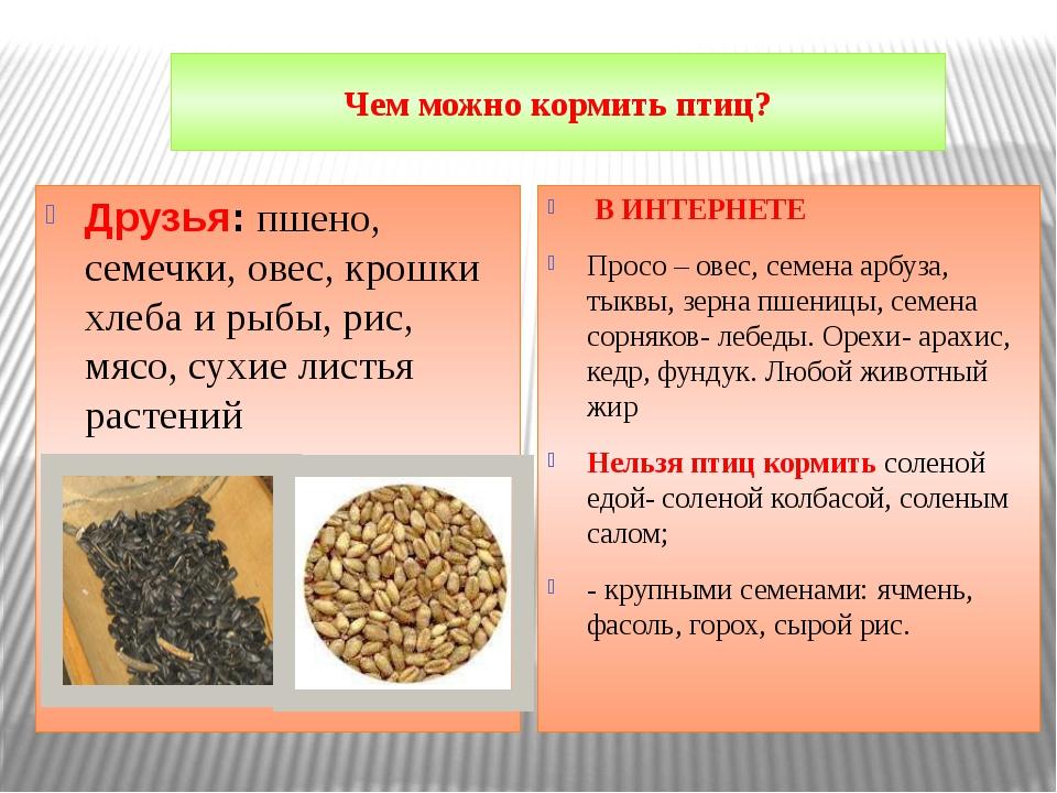 Чем можно кормить птиц? Друзья: пшено, семечки, овес, крошки хлеба и рыбы, ри...