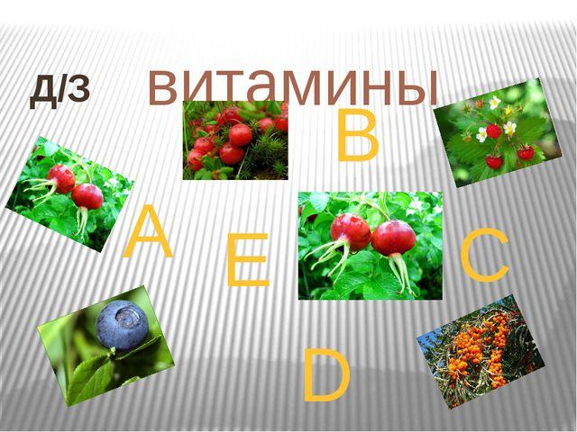 витамины A B C D E Д/З
