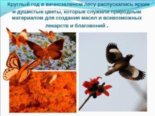 Круглый год в вечнозеленом лесу распускались яркие и душистые цветы, которые