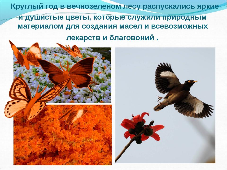 Круглый год в вечнозеленом лесу распускались яркие и душистые цветы, которые...