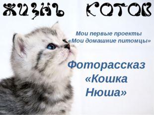 Мои первые проекты «Мои домашние питомцы» Фоторассказ «Кошка Нюша»