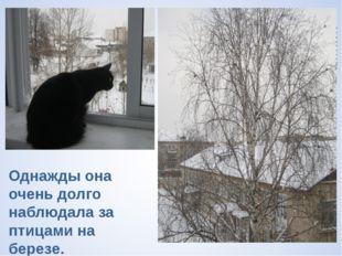 Однажды она очень долго наблюдала за птицами на березе.