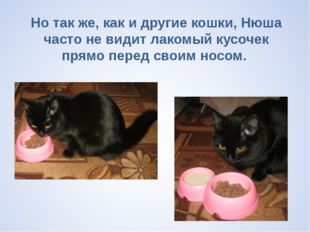 Но так же, как и другие кошки, Нюша часто не видит лакомый кусочек прямо пер