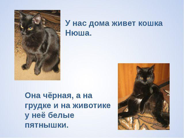 У нас дома живет кошка Нюша. Она чёрная, а на грудке и на животике у неё белы...