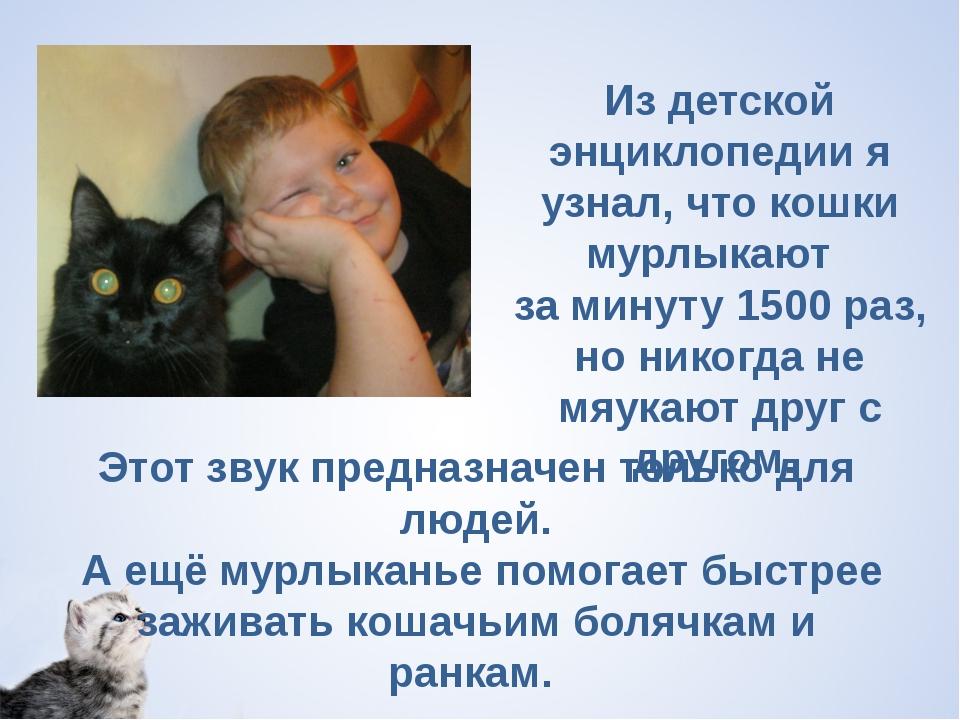 Из детской энциклопедии я узнал, что кошки мурлыкают  за минуту 1500 раз, но...
