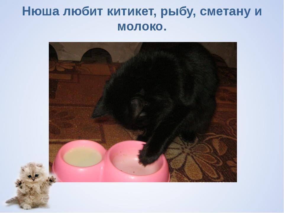 Нюша любит китикет, рыбу, сметану и молоко.
