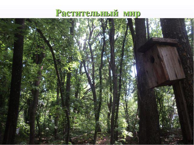 Растительный мир Органический мир исследуемых территорий соответствует болоти...