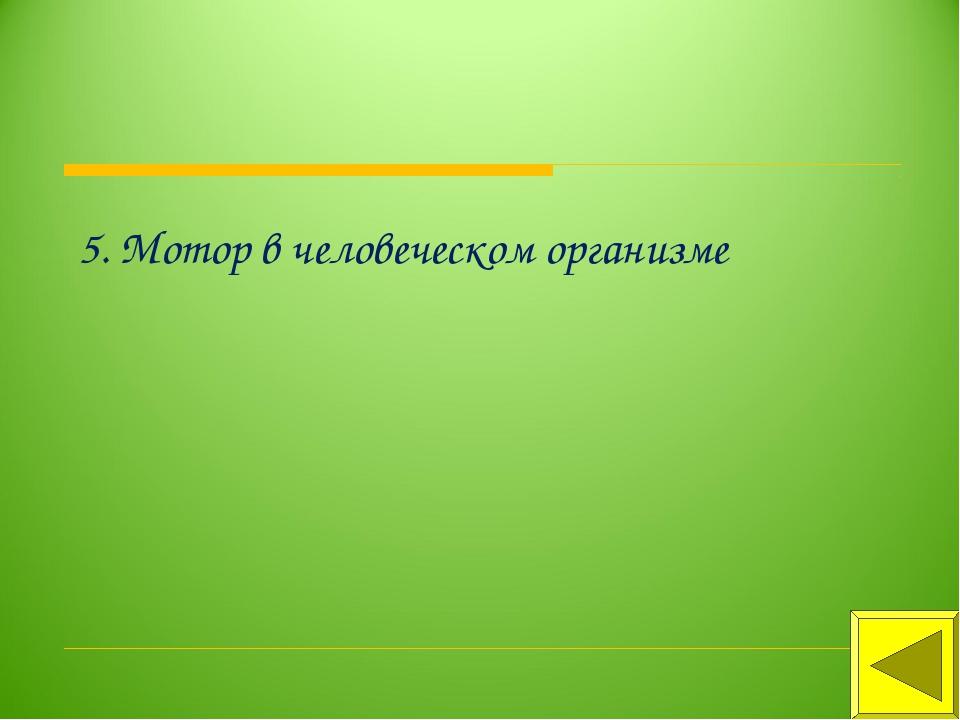 5. Мотор в человеческом организме