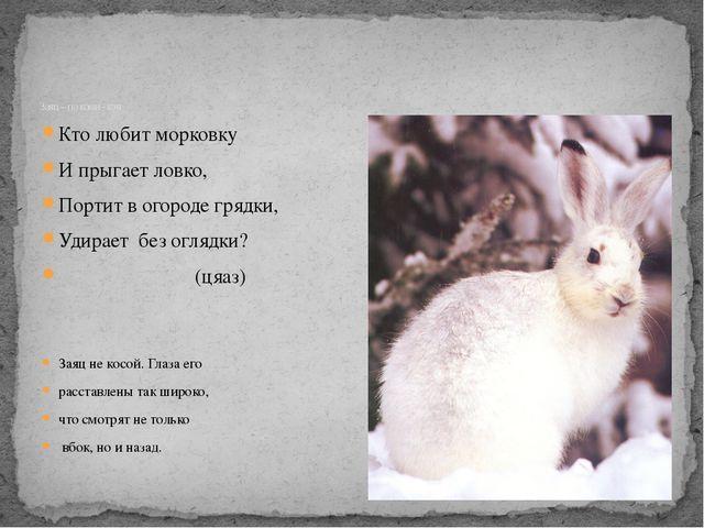 Кто любит морковку И прыгает ловко, Портит в огороде грядки, Удирает без огля...