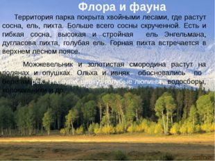 Территория парка покрыта хвойными лесами, где растут сосна, ель, пихта. Боль
