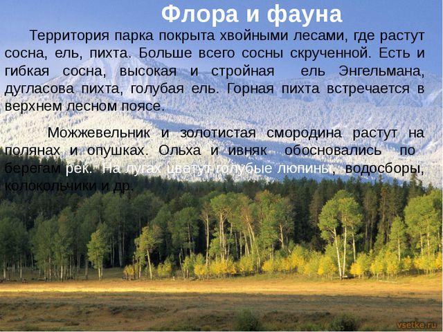 Территория парка покрыта хвойными лесами, где растут сосна, ель, пихта. Боль...