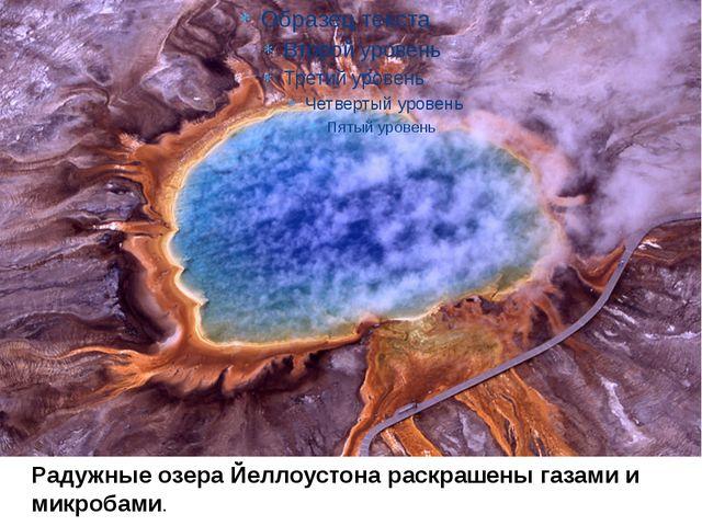 Радужные озера Йеллоустона раскрашены газами и микробами.