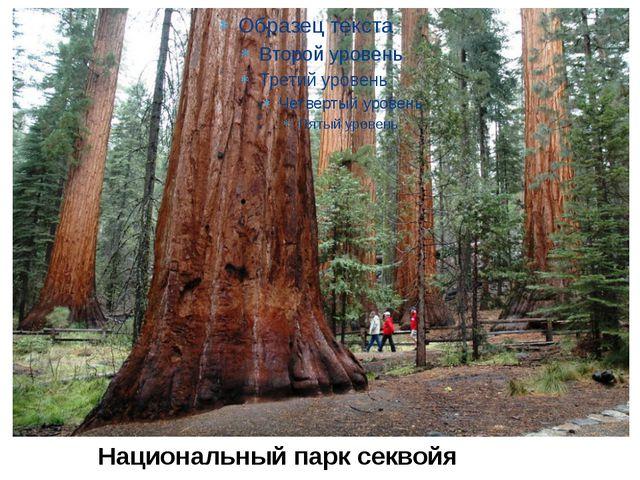 Национальный парк секвойя
