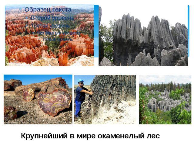 Крупнейший в мире окаменелый лес