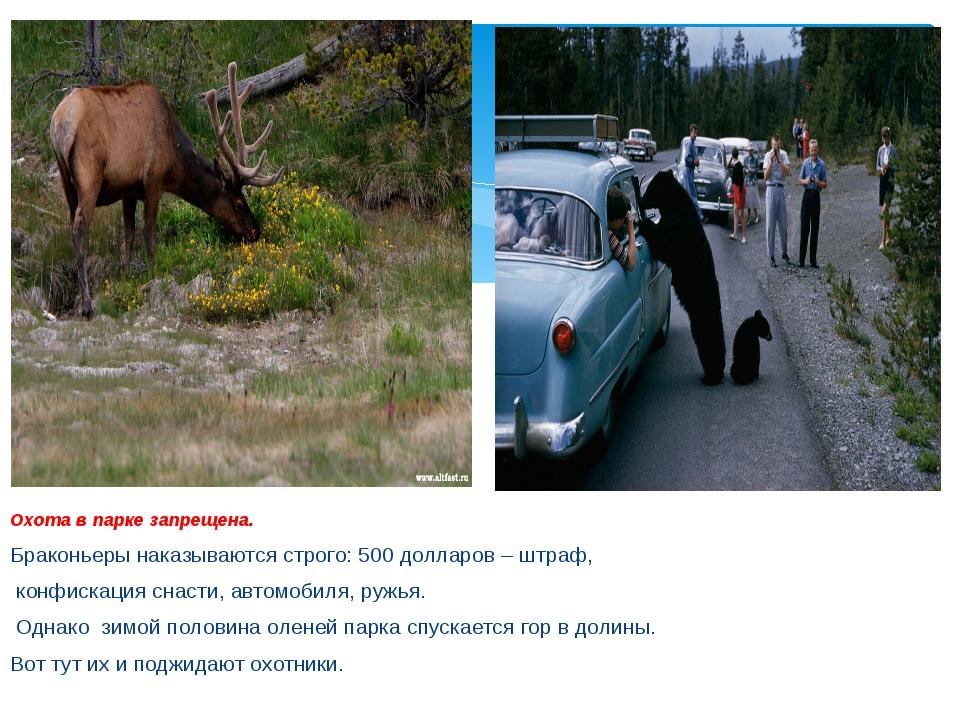 Охота в парке запрещена. Браконьеры наказываются строго: 500 долларов – штра...