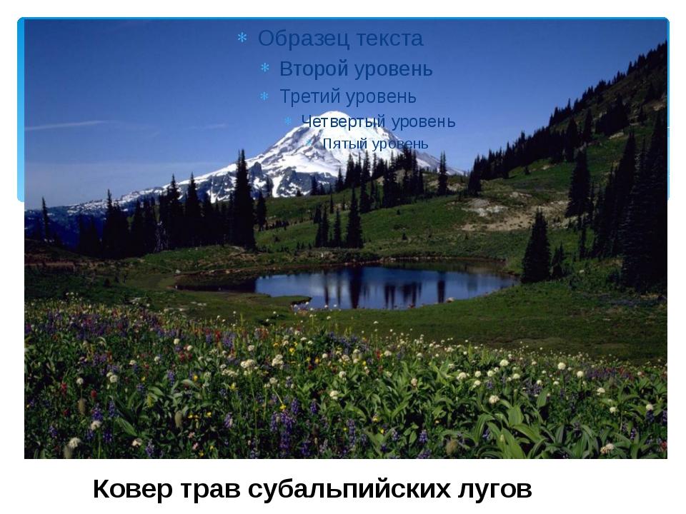 Ковер трав субальпийских лугов