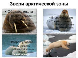 Арктика и человек Человек не является коренным жителем Арктики, но она всегда