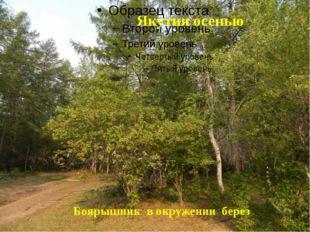 Боярышник в окружении берез Якутия осенью