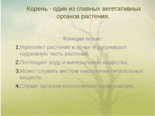 Корень - один из главных вегетативных органов растения. Функции корня: Укрепл