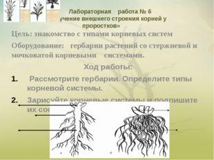 Цель: знакомство с типами корневых систем Оборудование: гербарии растений со