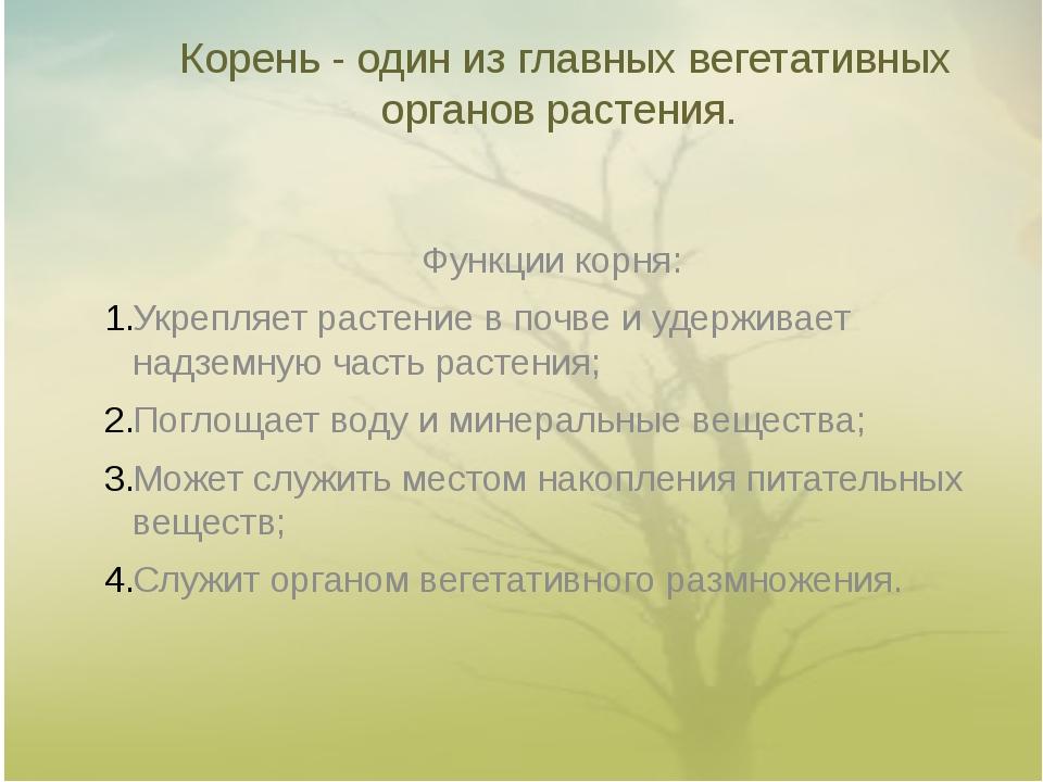 Корень - один из главных вегетативных органов растения. Функции корня: Укрепл...
