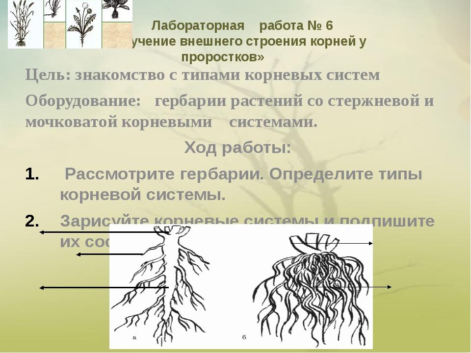 Цель: знакомство с типами корневых систем Оборудование: гербарии растений со...