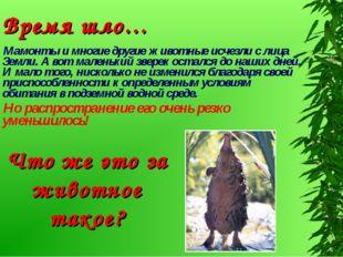 Мамонты и многие другие животные исчезли с лица Земли. А вот маленький зверек