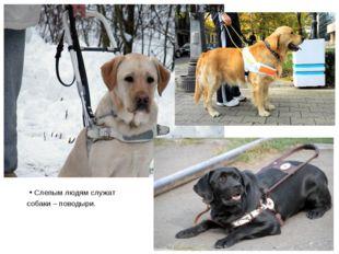 Слепым людям служат собаки – поводыри.