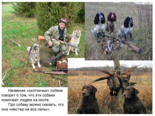 Название «охотничьи» собаки говорит о том, что эти собаки помогают людям на