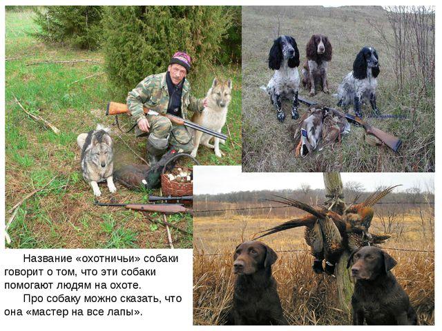 Название «охотничьи» собаки говорит о том, что эти собаки помогают людям на...