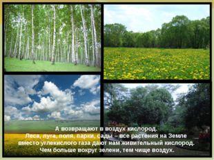 А возвращают в воздух кислород. Леса, луга, поля, парки, сады – все растения