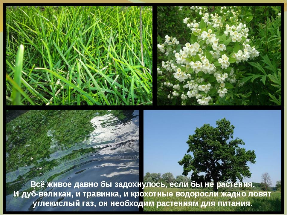 Всё живое давно бы задохнулось, если бы не растения. И дуб-великан, и травинк...