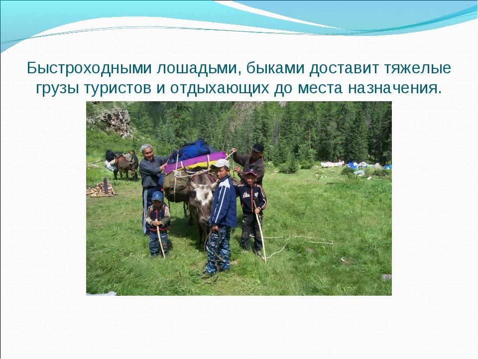 Быстроходными лошадьми, быками доставит тяжелые грузы туристов и отдыхающих д...