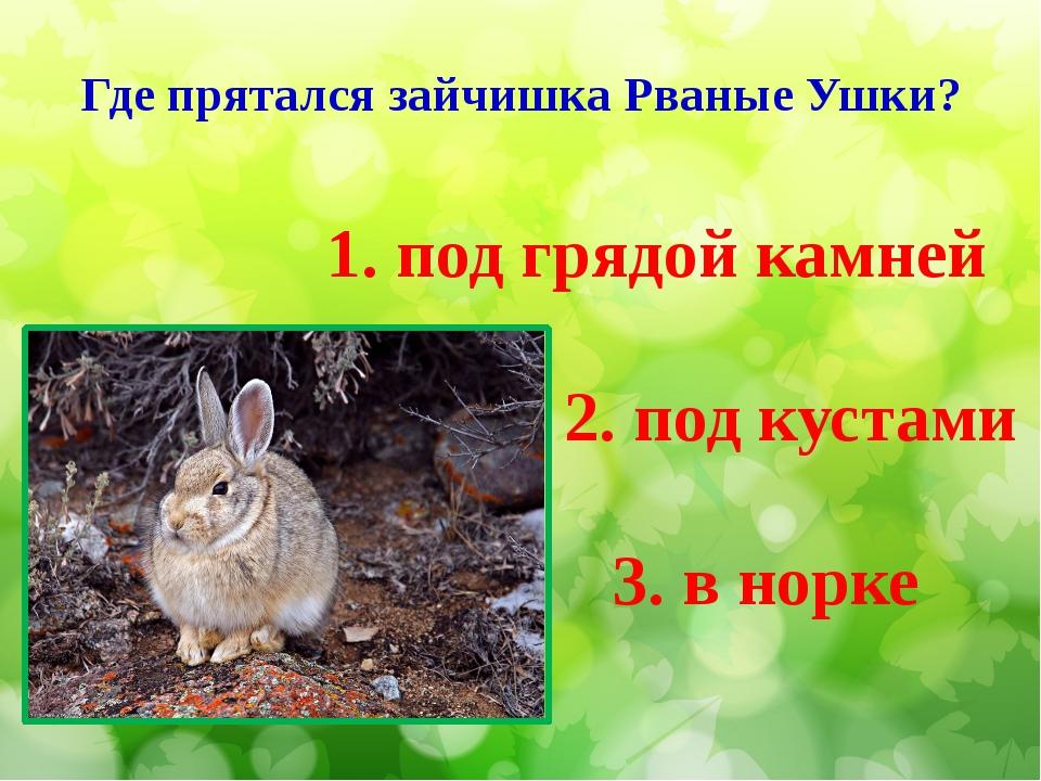 Где прятался зайчишка Рваные Ушки? 3. в норке 1. под грядой камней 2. под кус...