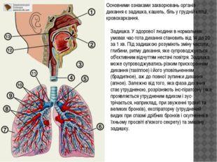 Основними ознаками захворювань органів дихання є задишка, кашель, біль у груд