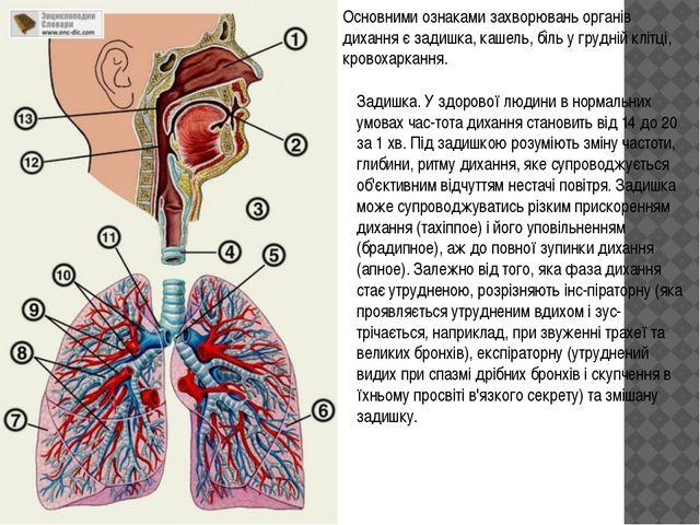 Основними ознаками захворювань органів дихання є задишка, кашель, біль у груд...