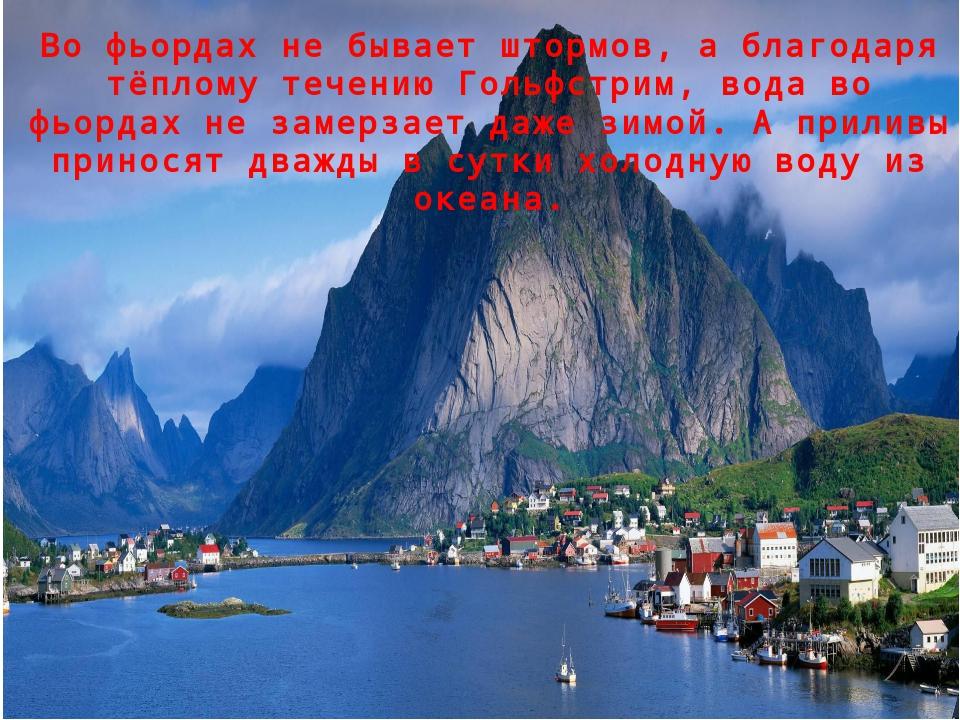 Во фьордах не бывает штормов, а благодаря тёплому течению Гольфстрим, вода во...