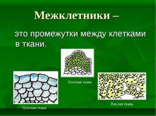 Межклетники – это промежутки между клетками в ткани. Плотная ткань Плотная тк