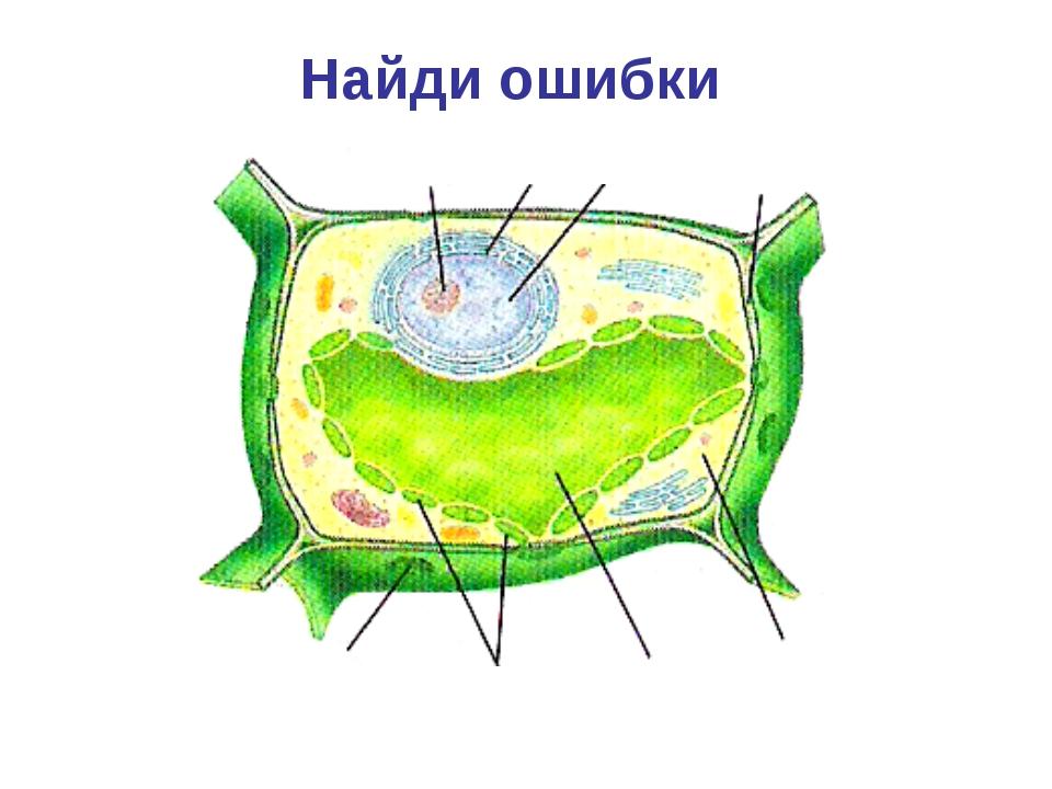 Хромопласты Вакуоль Оболочка Цитоплазма Ядро Пора Найди ошибки