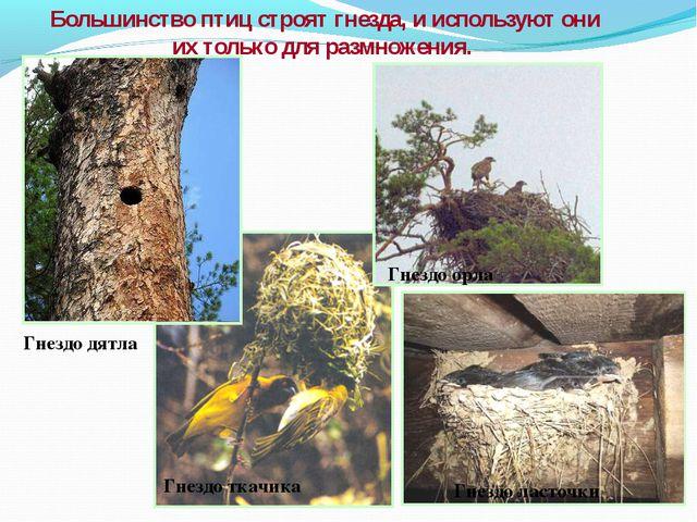Большинство птиц строят гнезда, и используют они их только для размножения. Г...