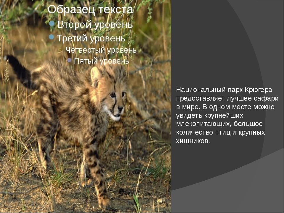 Национальный парк Крюгера предоставляет лучшее сафари в мире. В одном месте...