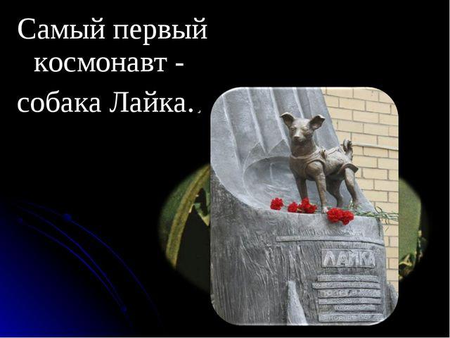 Самый первый космонавт - собака Лайка..