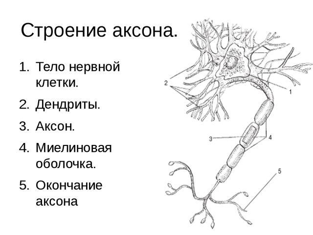 Строение аксона. Тело нервной клетки. Дендриты. Аксон. Миелиновая оболочка. О...