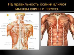 На правильность осанки влияют мышцы спины и пресса.